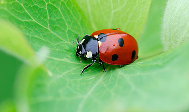 Other Pest Facts - American Pest Control