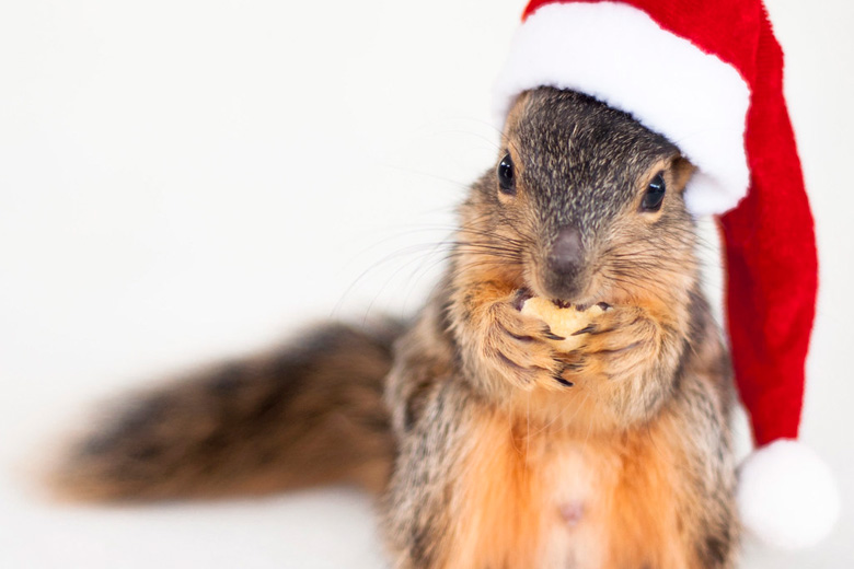 Squirrels for the Holidays