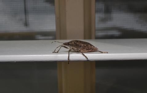 We Don't Need No Stinking…Bugs!
