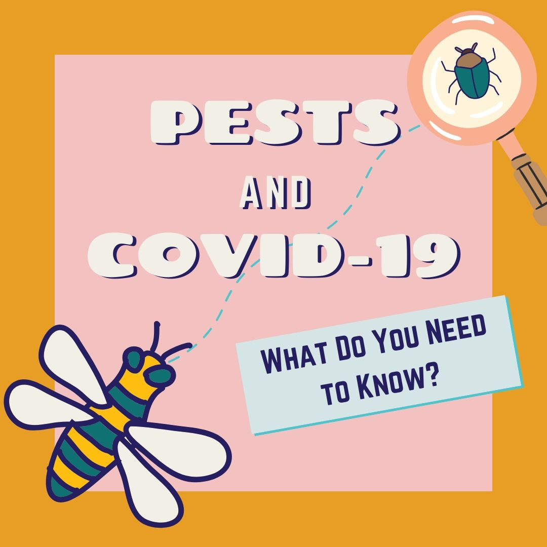 Pests & COVID-19: What do you need to know?