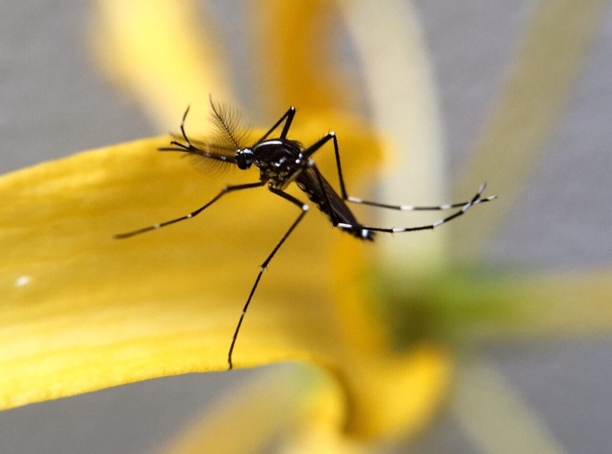 Why Are Mosquitoes Worse After Rain In Your Yard?