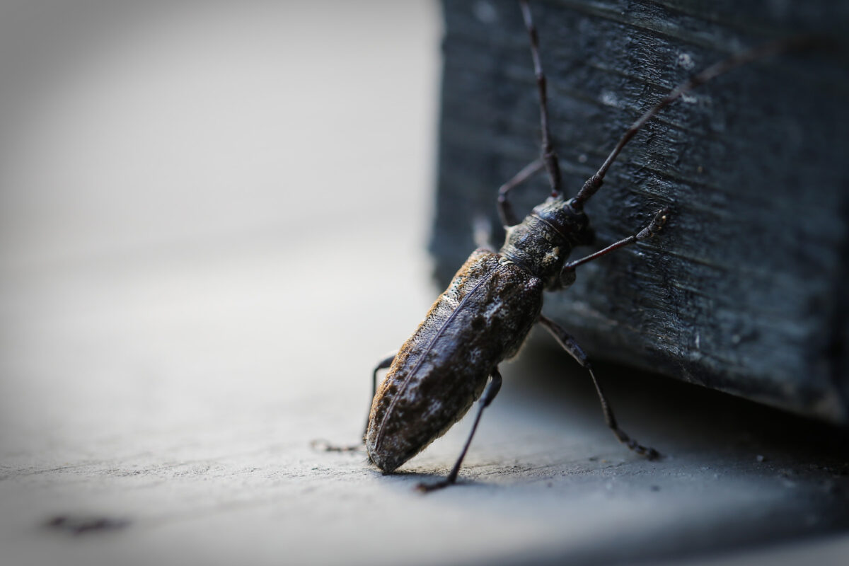 Will Cockroaches Leave Your Home If There Is No Food?