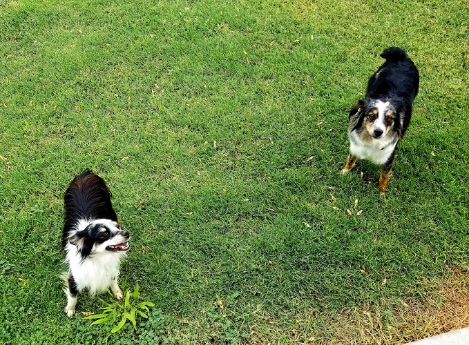 How Do You Know If You Have Fleas In Your Yard?